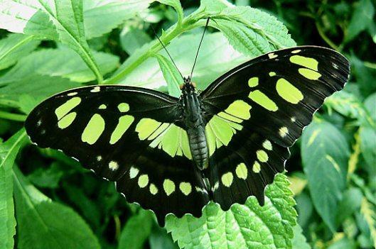 http://kirtsy.com/2011/07/26/green/?kp=YToxOntzOjE6ImkiO2k6MTg5O30=