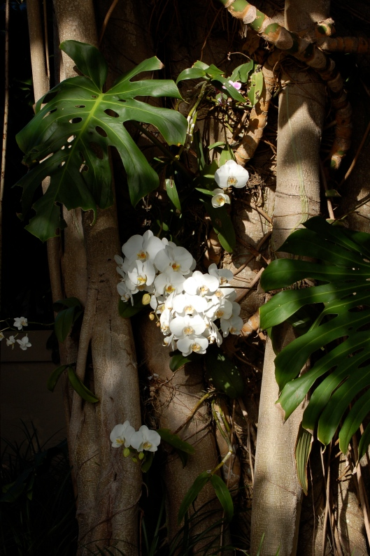 Orchids growing on trees.
