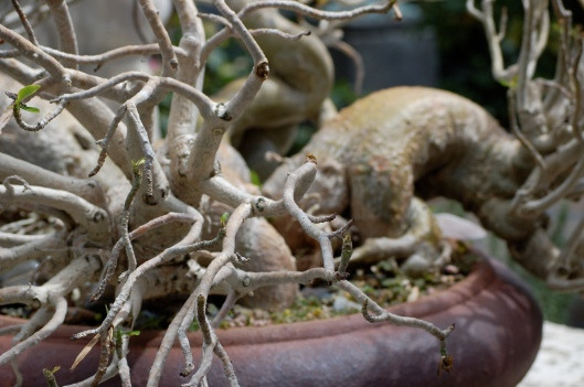 Roots of a Bonsai Tree at Mecox Design